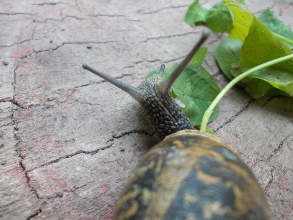 snails by Matilda